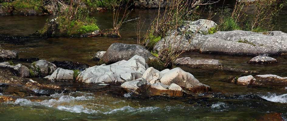 poisson-peche-riviere